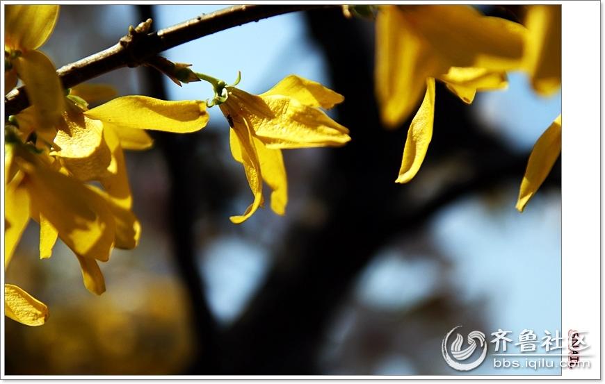 春天温暖的太阳