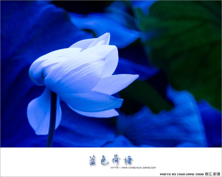 水墨素材蓝色大花