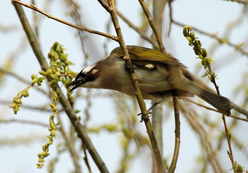 春天的小鸟 - 东营专区 - 齐鲁社区 齐鲁社区
