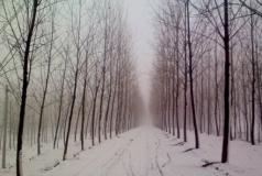 雪中骑行金堤