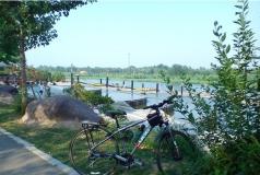 减河湿地风景
