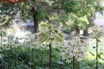 北京植物园 [22P+2P验证]