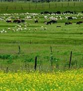 记录祁连山下的牧场